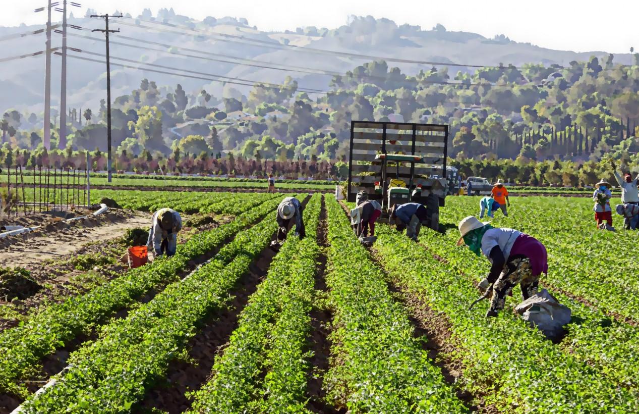 regolarizzazione immigrati agricoltura