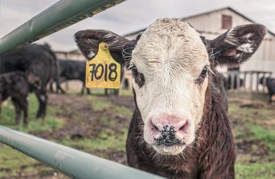 Donazione di sangue animale: è attività agricola?