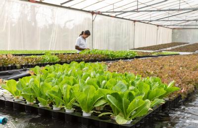 Contributi agricoli, salta la scadenza del 16 luglio