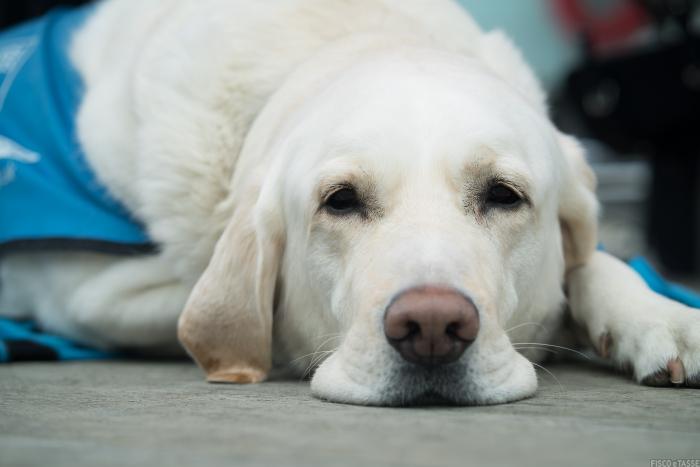 Cani guida e detrazioni nella dichiarazione dei redditi 2020