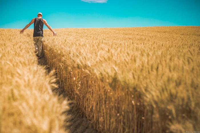Quale aliquota IVA si applica alla cessione di oli vegetali?