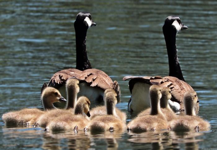 COVID 19: congedi, permessi 104 e bonus baby sitter