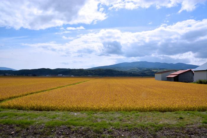 Il rischio in agricoltura: come ridurlo