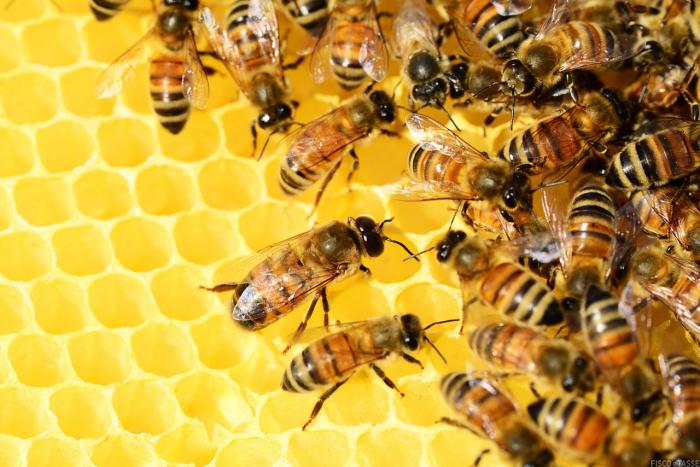 IRPEF: calcolo per gli apicoltori con meno di 20 alveari
