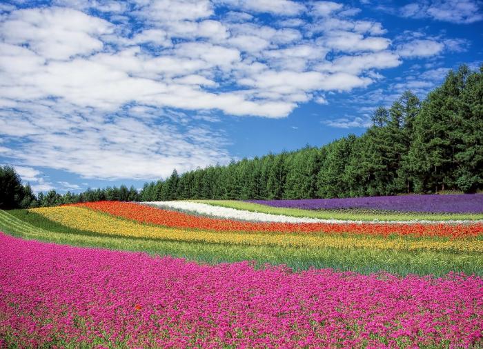 Finanziaria 2020: modifiche al reddito per imprenditori agricoli florovivaistici