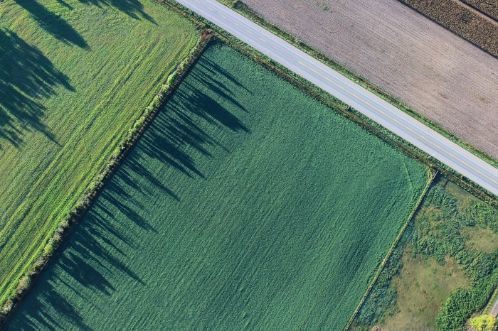 Terreni agricoli: imposta di registro ridotta in caso di uso per imboschimento