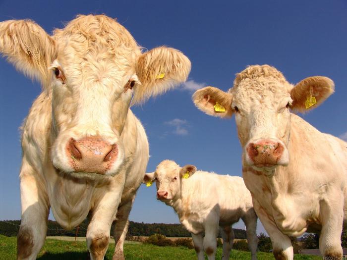 rilancio settori agricoli