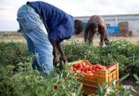 immigrati agricoltura regolarizzazione