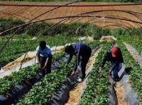 ccnl operai agricoli